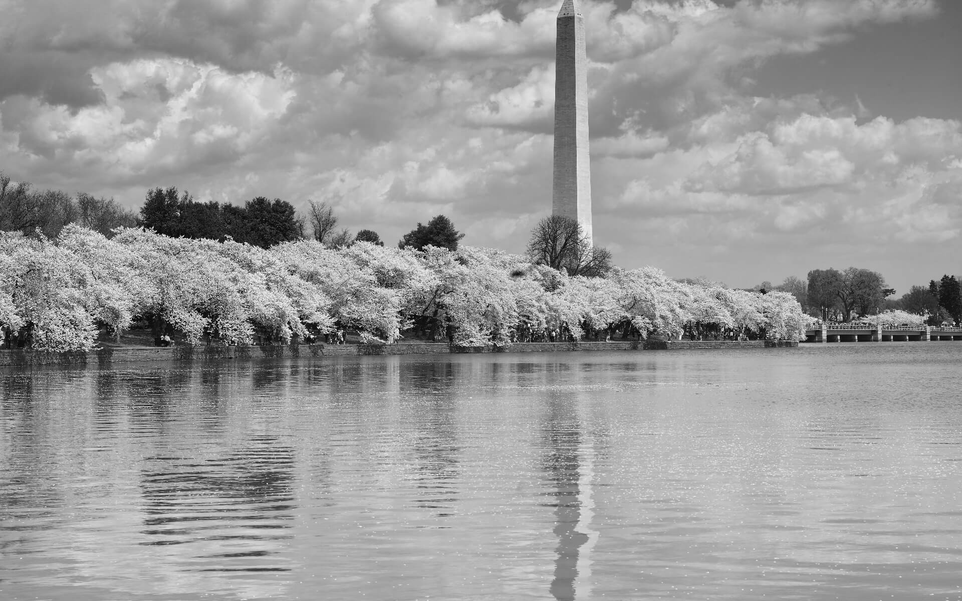 Washington Monument from the Tidal in Washington, D.C.